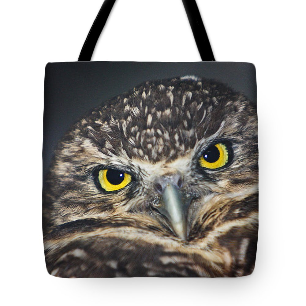 Owl Tote Bag featuring the photograph Owl Face To Face by Douglas Barnett