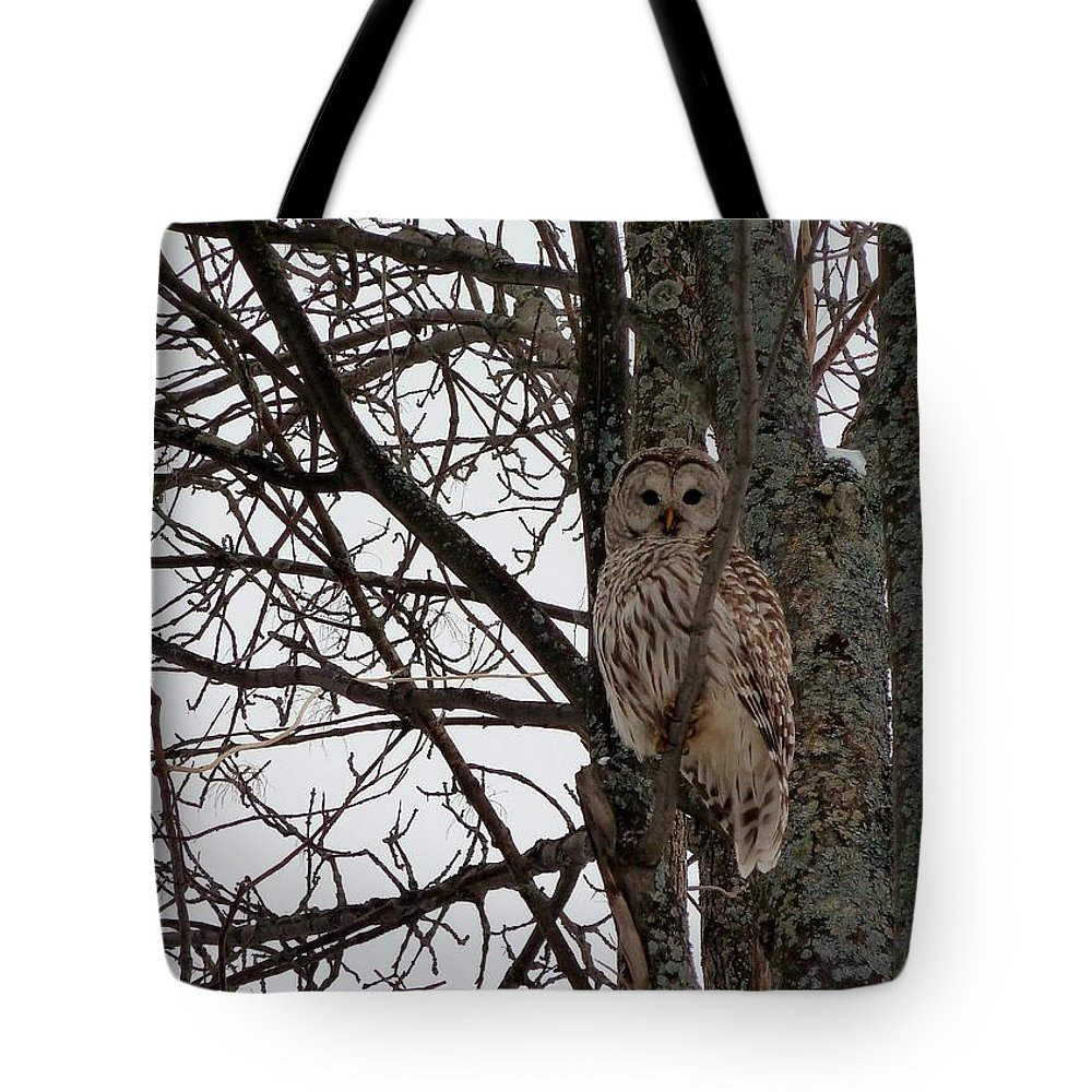 Owl Tote Bag featuring the photograph Owl In Winter by Claire Bull