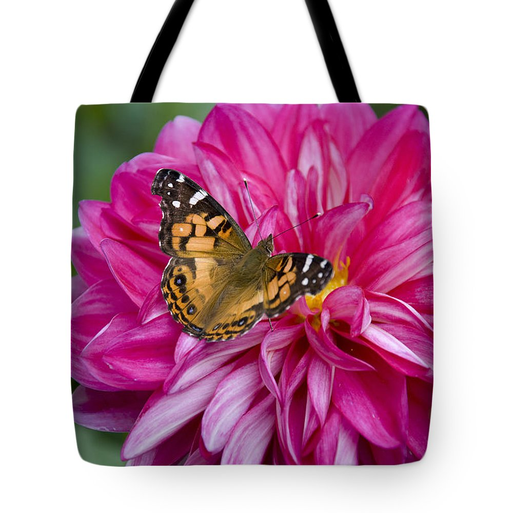 Painted Lady Tote Bag featuring the photograph Painted Lady On Dahlia by Charles Harden