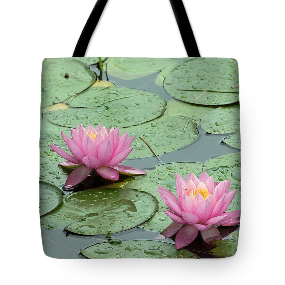 Flower Tote Bag featuring the photograph Pair Of Pink Water Lilies With Rain Drops by Wendell Clendennen