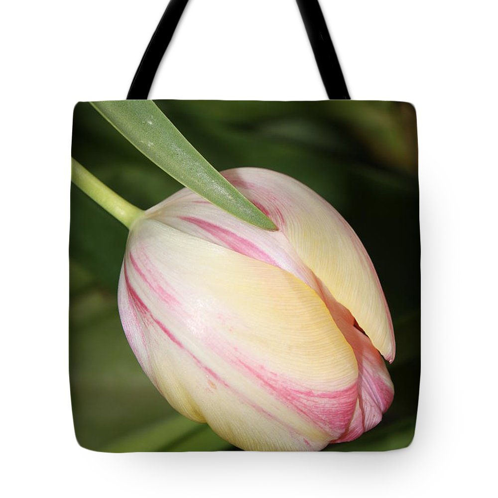 Tulip Tote Bag featuring the photograph Pale Yellow And Pink Tulip by Carol Groenen