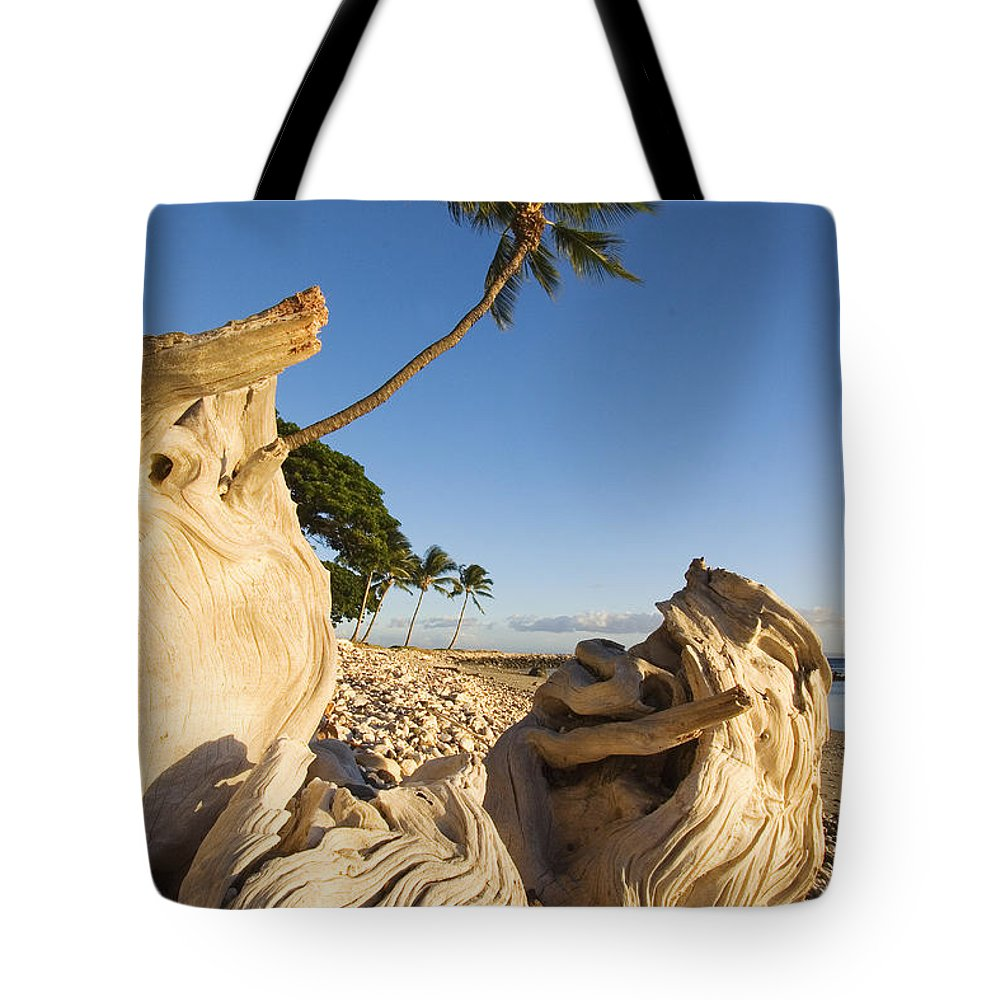 Afternoon Tote Bag featuring the photograph Palm And Driftwood by Ron Dahlquist - Printscapes