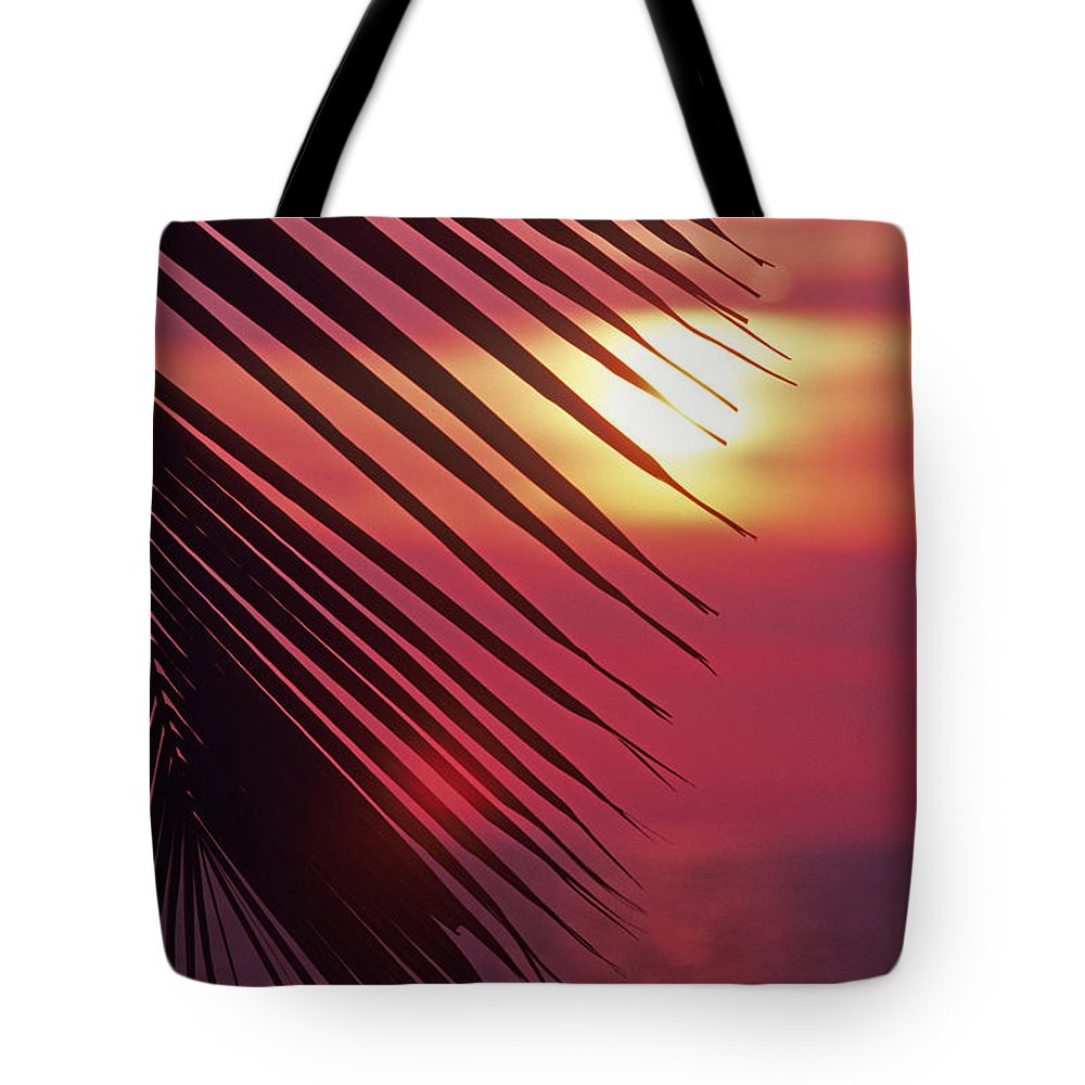 Beautiful Tote Bag featuring the photograph Palm At Sunset by Carl Shaneff - Printscapes