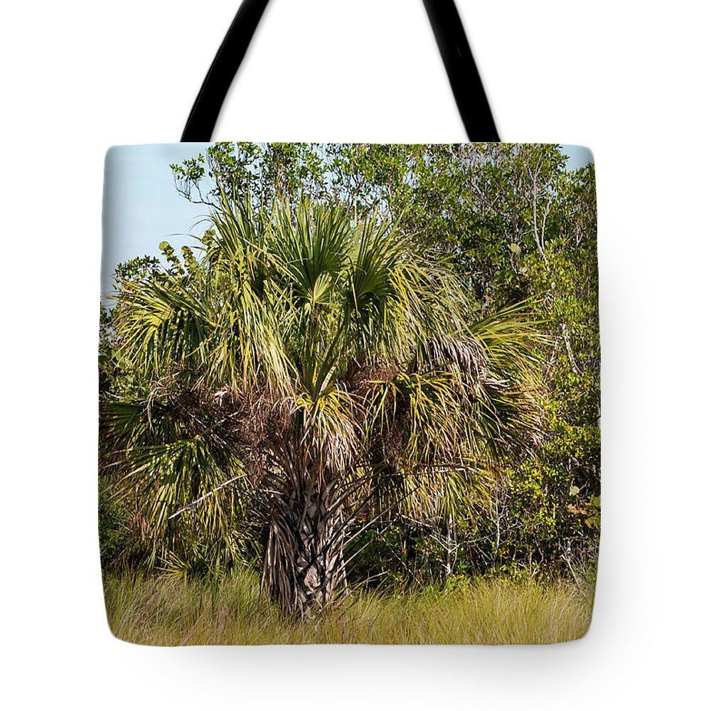 The Bailey Tract Tote Bag featuring the photograph Palm Tree In Golden Grass by Bob Phillips