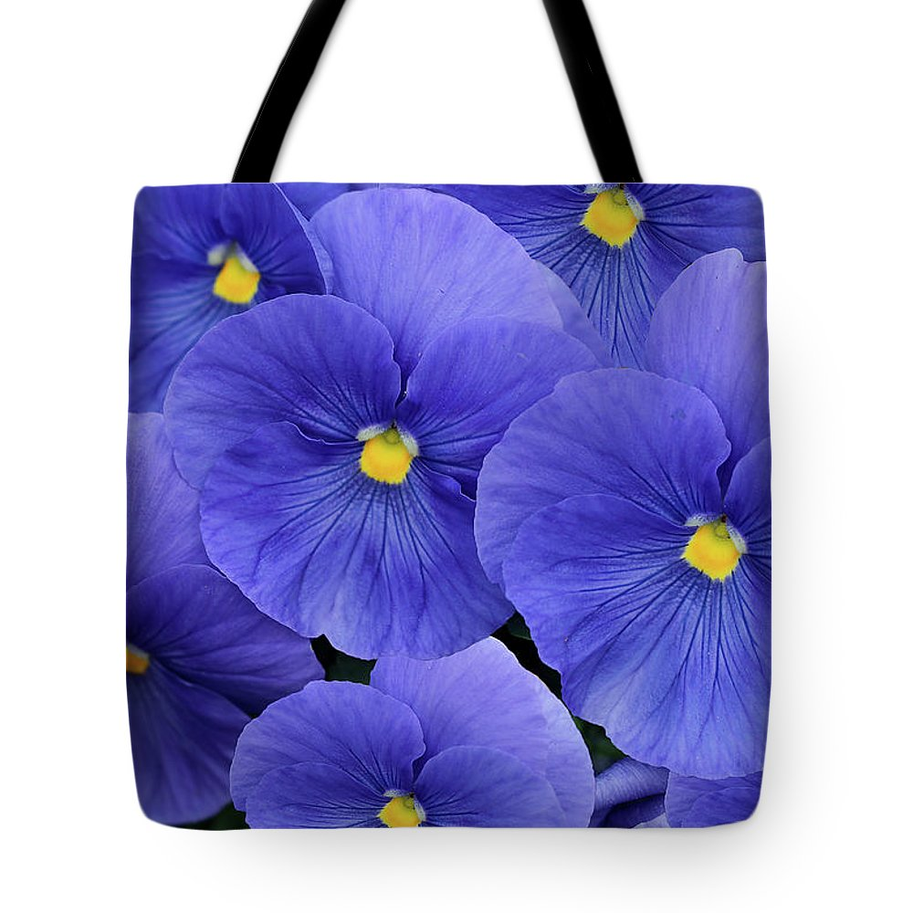 Pansy Tote Bag featuring the photograph Pansy Profusion by Vanessa Thomas