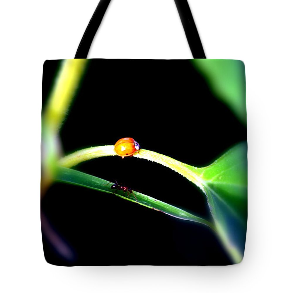 Ant Tote Bag featuring the photograph Parallel Paths by Deborah Irving
