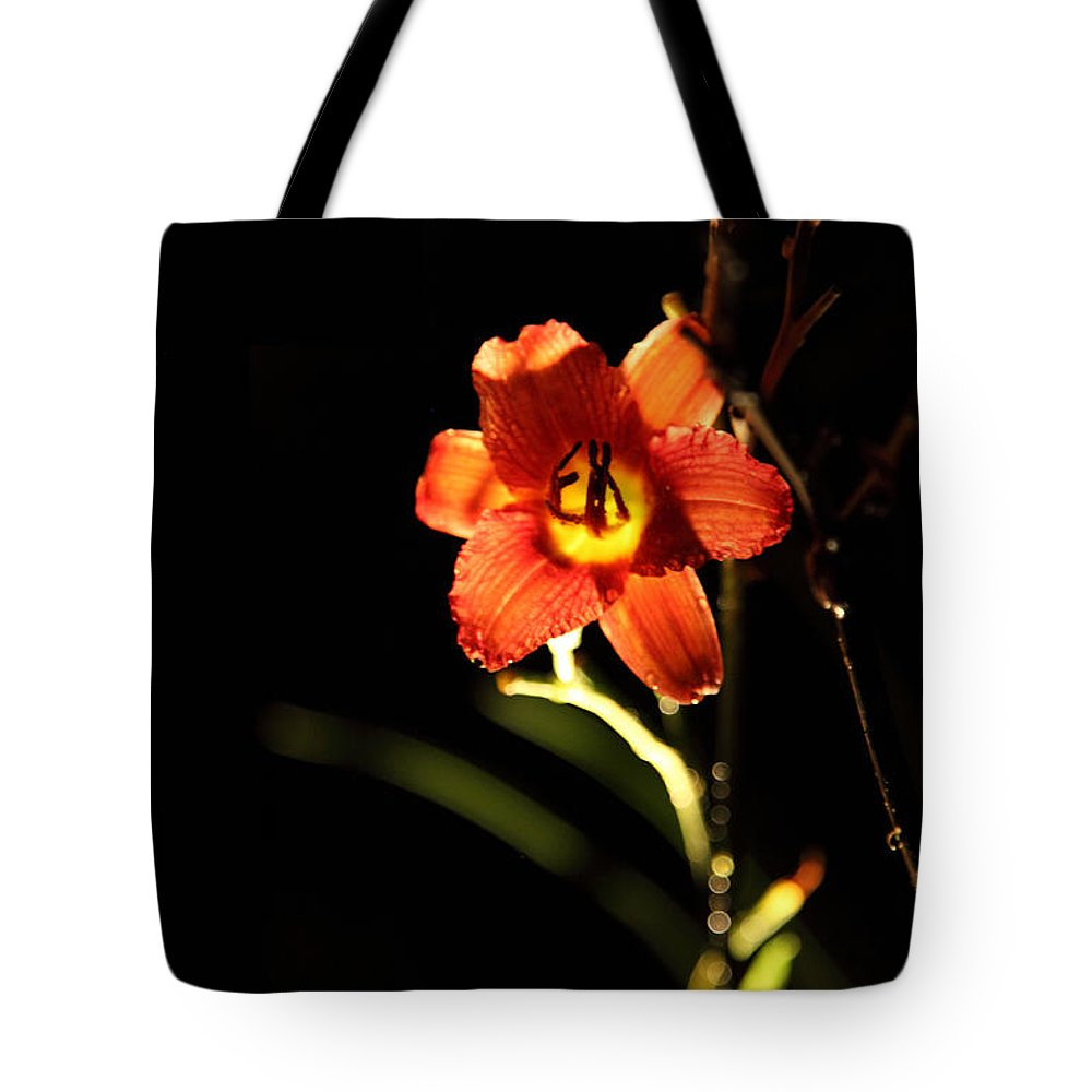 pardon Me Tote Bag featuring the photograph Pardon Me At Night by Amanda Barcon
