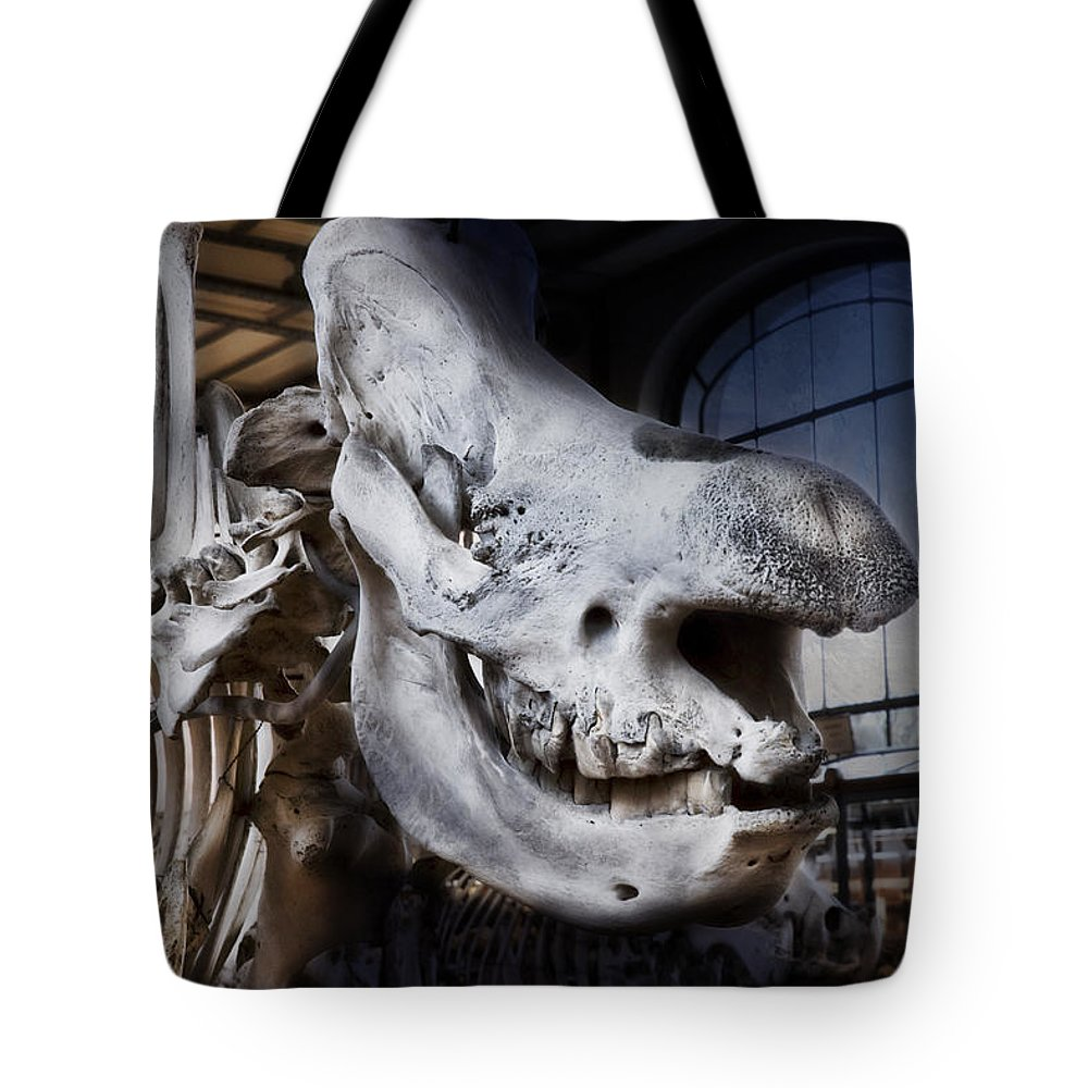 Evie Tote Bag featuring the photograph Paris Gallery Of Paleontology 3 by Evie Carrier