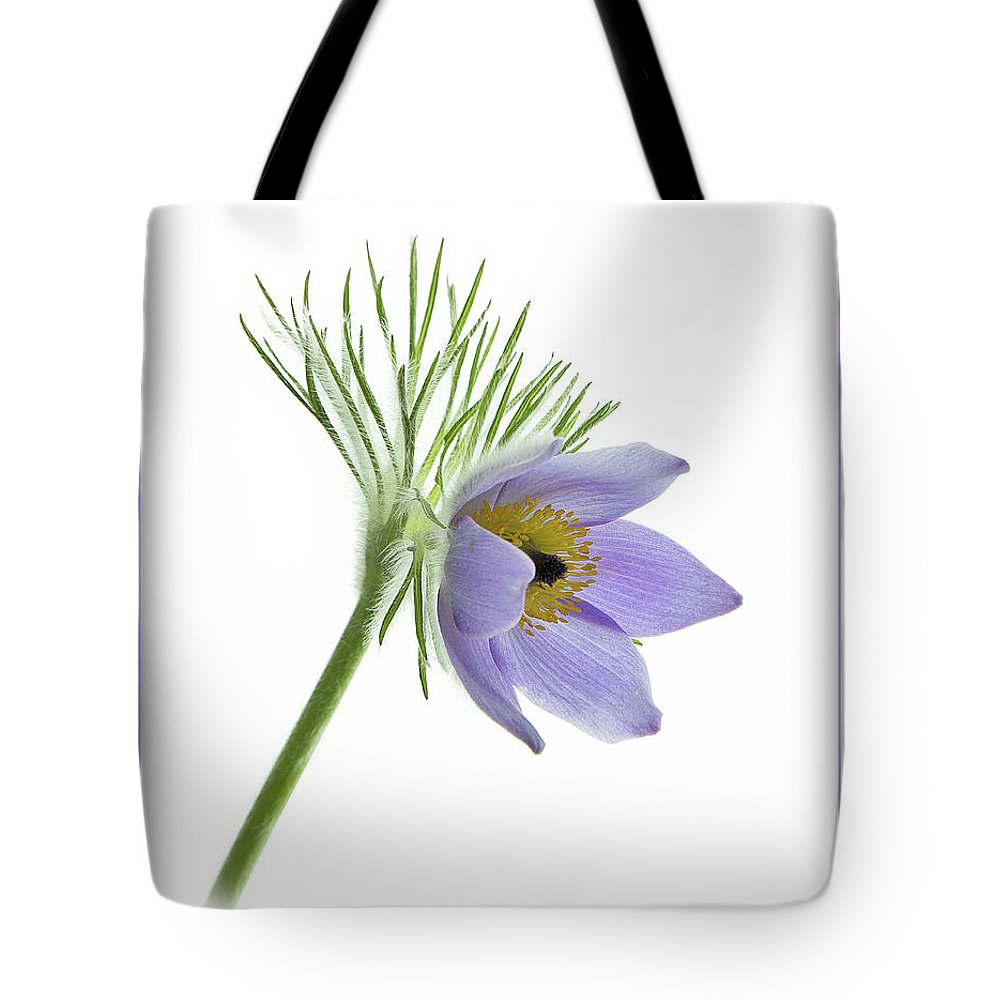 Pasque Tote Bag featuring the photograph Pasque Flower by Robert Murray