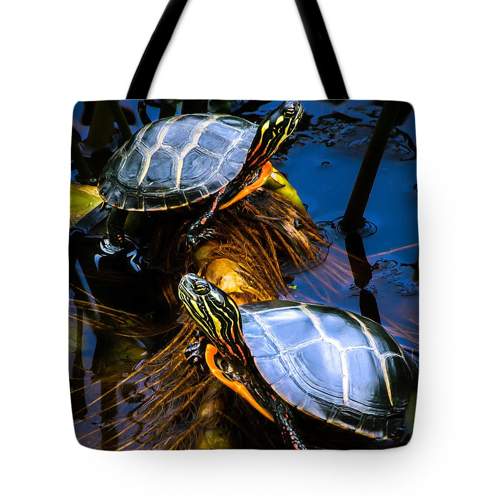 Painted Turtle Lifestyle Products