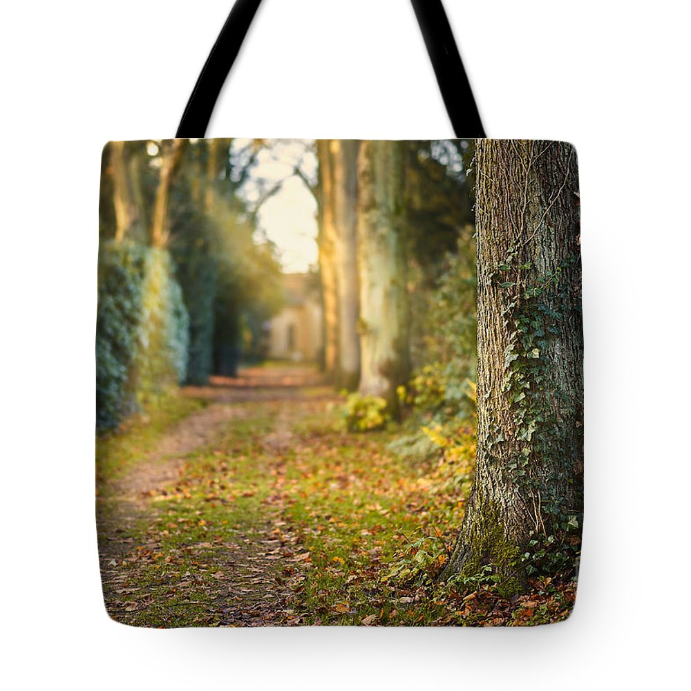 Path Tote Bag featuring the photograph Path Into The Light by Daniel Heine
