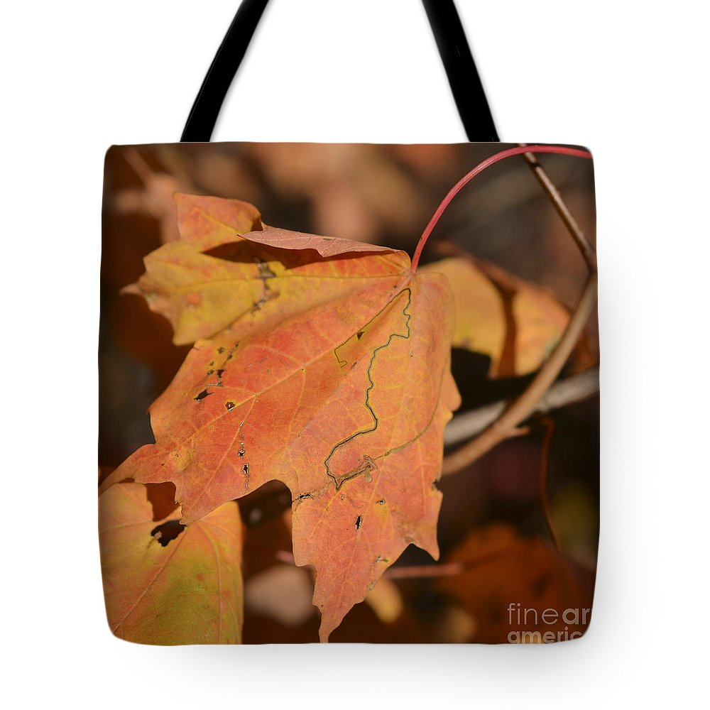 Maple Leaf Tote Bag featuring the photograph Path Through A Leaf by Alana Boltwood