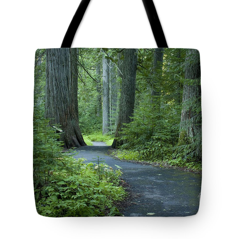 Grove Tote Bag featuring the photograph Path Through The Cedars by Idaho Scenic Images Linda Lantzy
