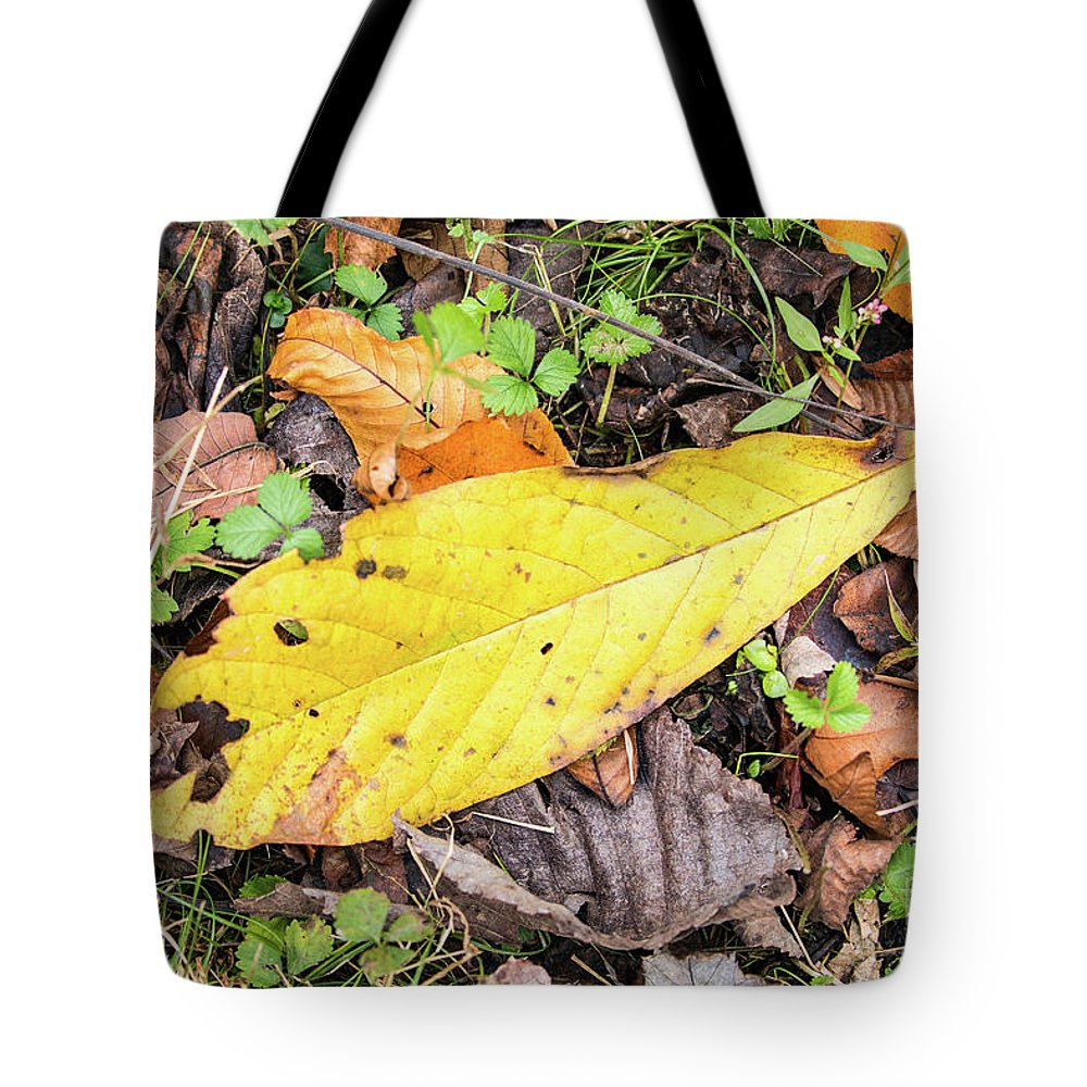 Asimina Triloba Tote Bag featuring the photograph Paw Paw Leaf Fall Colors by Edie Ann Mendenhall