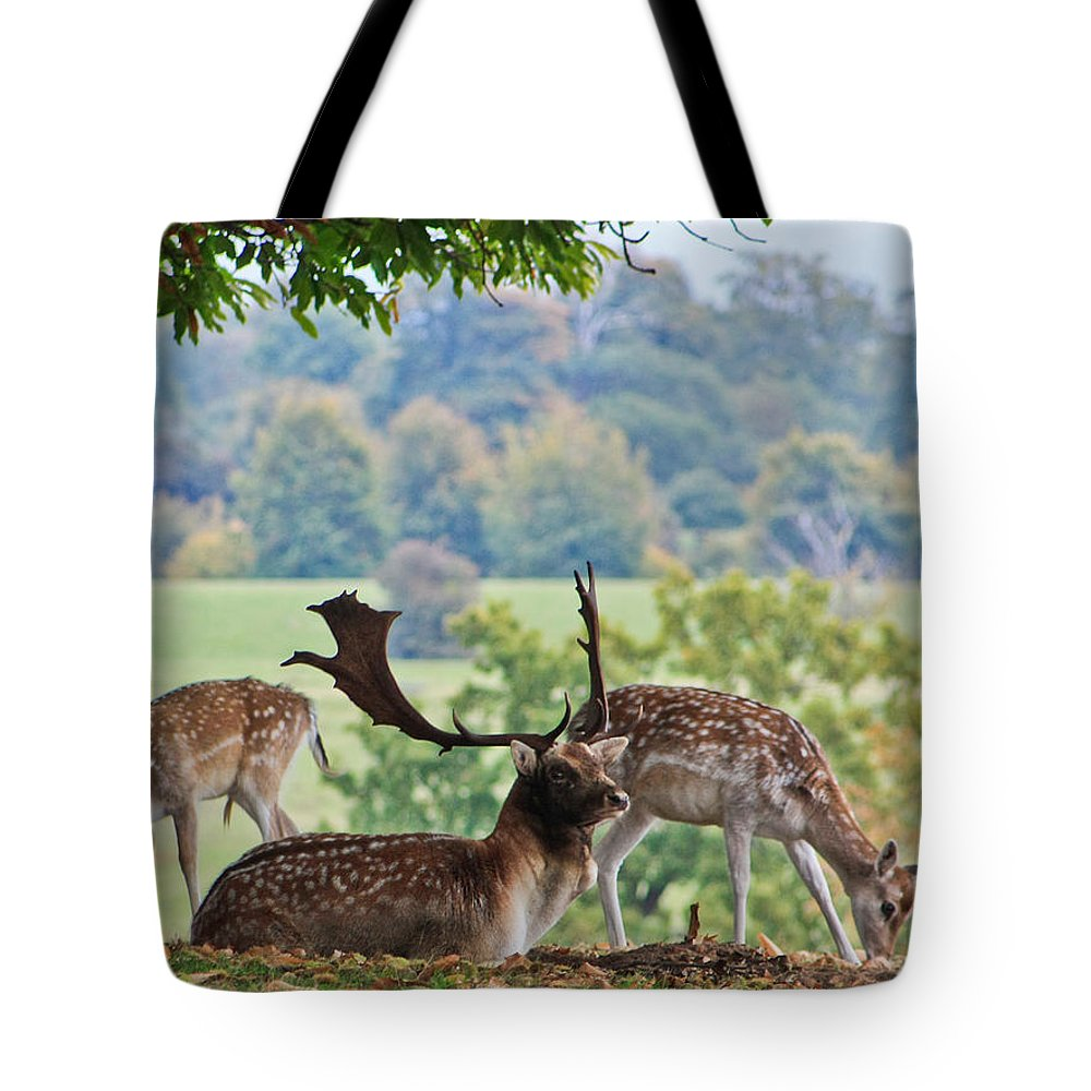 Deer Tote Bag featuring the photograph Peace And Quiet by Dawn OConnor