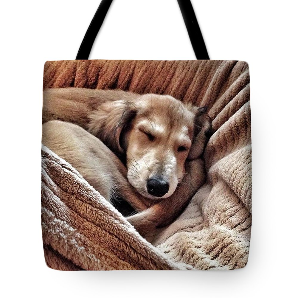Persiangreyhound Tote Bag featuring the photograph Peace At Last #saluki by John Edwards