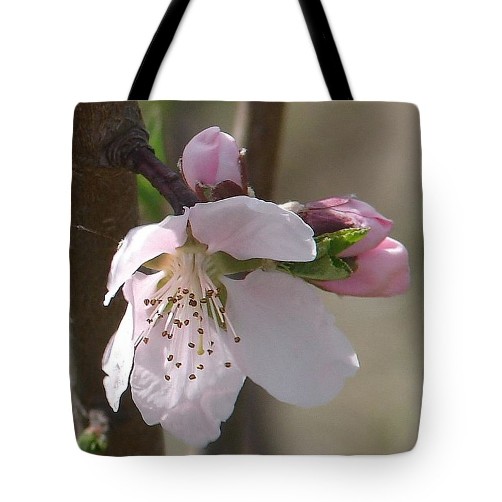 Pink Tree Branch Green Leaves Tote Bag featuring the photograph Peach Tree 3 by Luciana Seymour