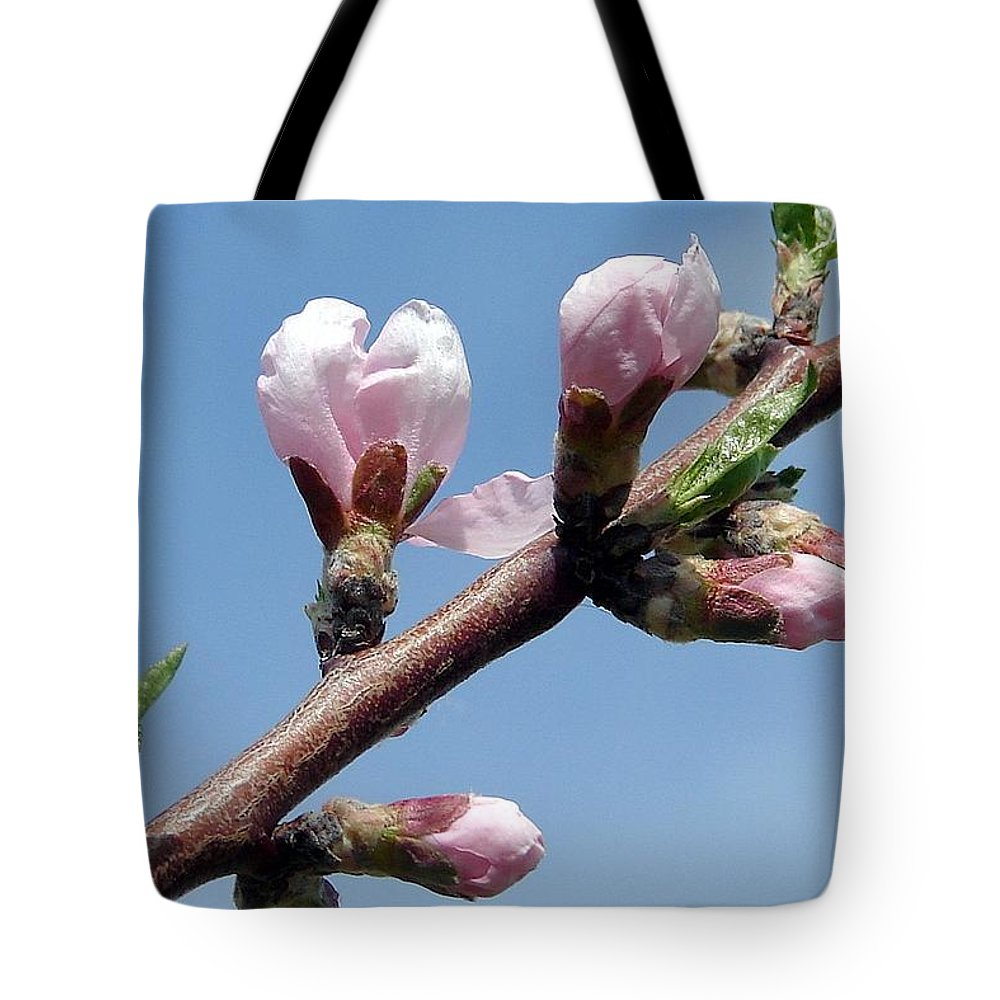Blooms Tree Branch Pink Tote Bag featuring the photograph Peach Tree by Luciana Seymour