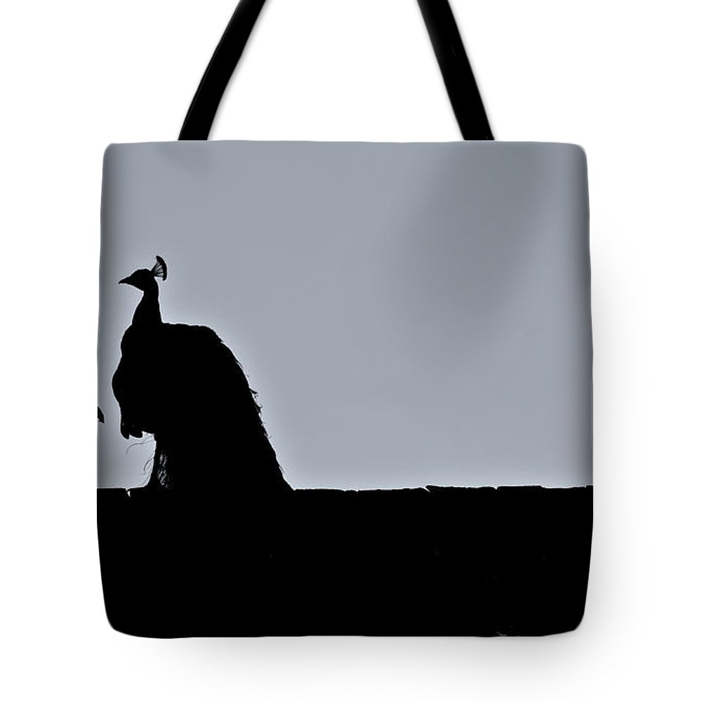 Peacock Tote Bag featuring the photograph Peacock At Night by Douglas Barnett