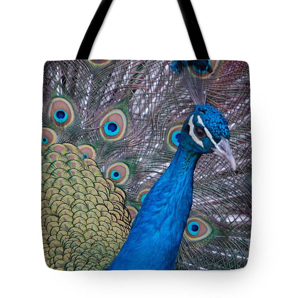 Peacock Tote Bag featuring the photograph Peacock by Frank Stallone