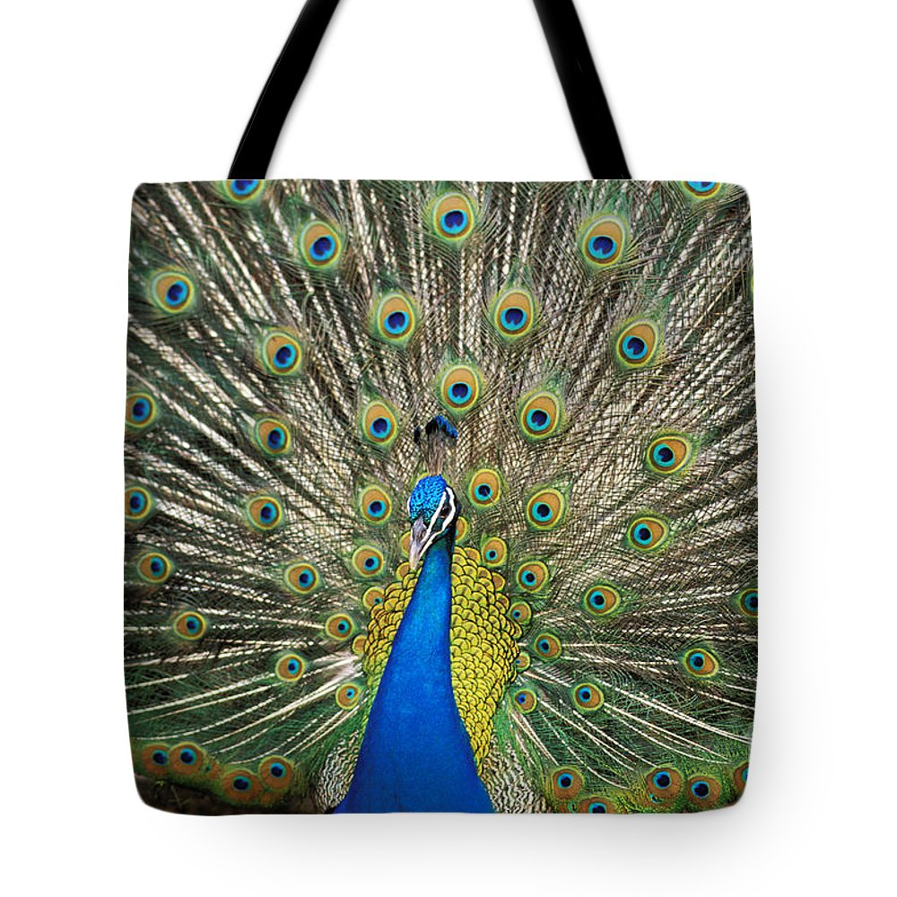 Animal Art Tote Bag featuring the photograph Peacock by William Waterfall - Printscapes