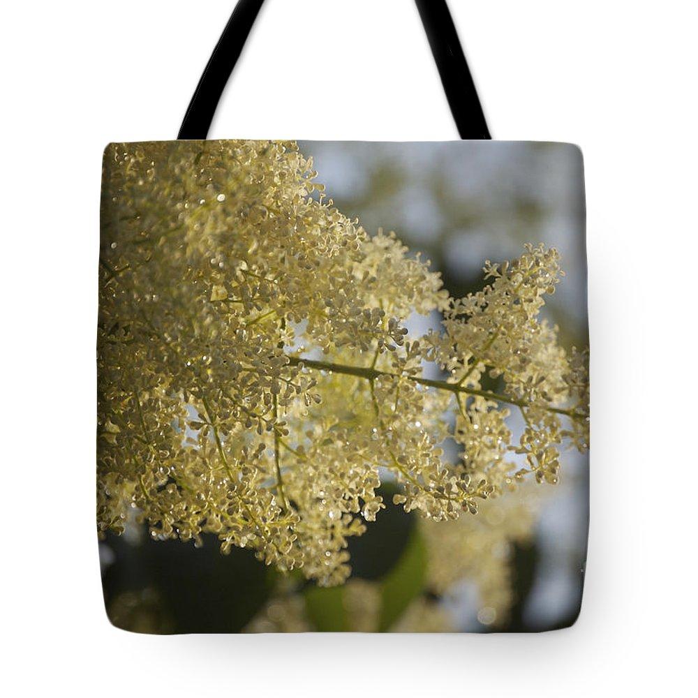 Pear Tote Bag featuring the photograph Pear Blossom by Faith Harron Boudreau
