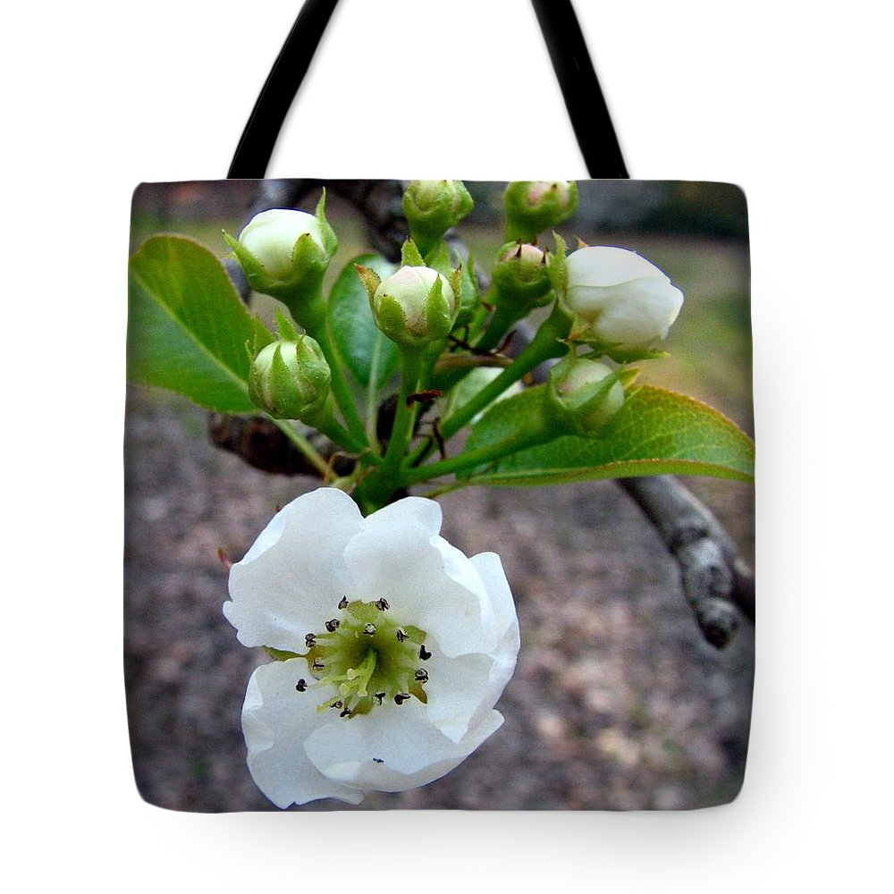 Pear Tree Blossum Tote Bag featuring the photograph Pear Tree Blossom 3 by J M Farris Photography