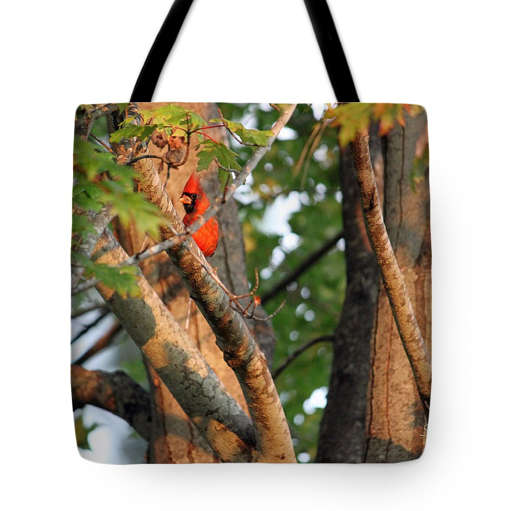 Red Tote Bag featuring the photograph Peek-aboo by Suzanne Gaff