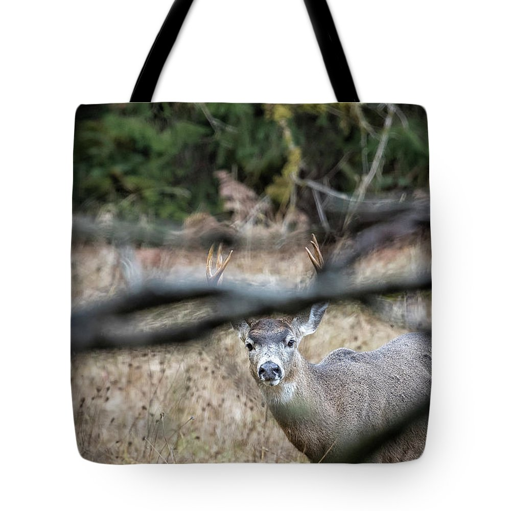 Buck Tote Bag featuring the photograph Peekaboo by Belinda Greb