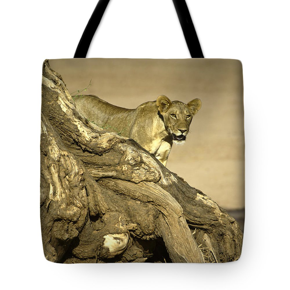 Africa Tote Bag featuring the photograph Peeking Out by Michele Burgess