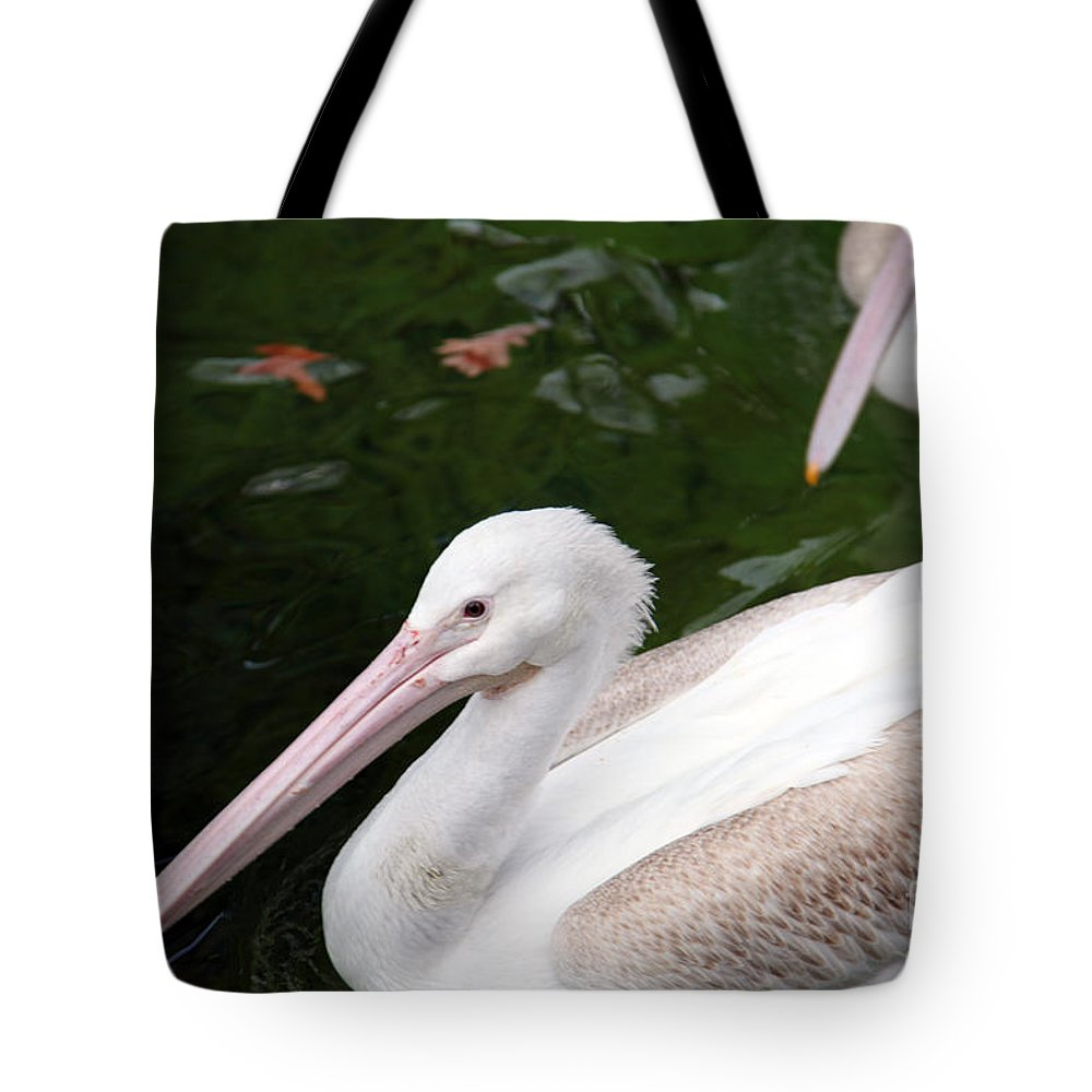 Pelican Tote Bag featuring the photograph Pelican by Amanda Barcon