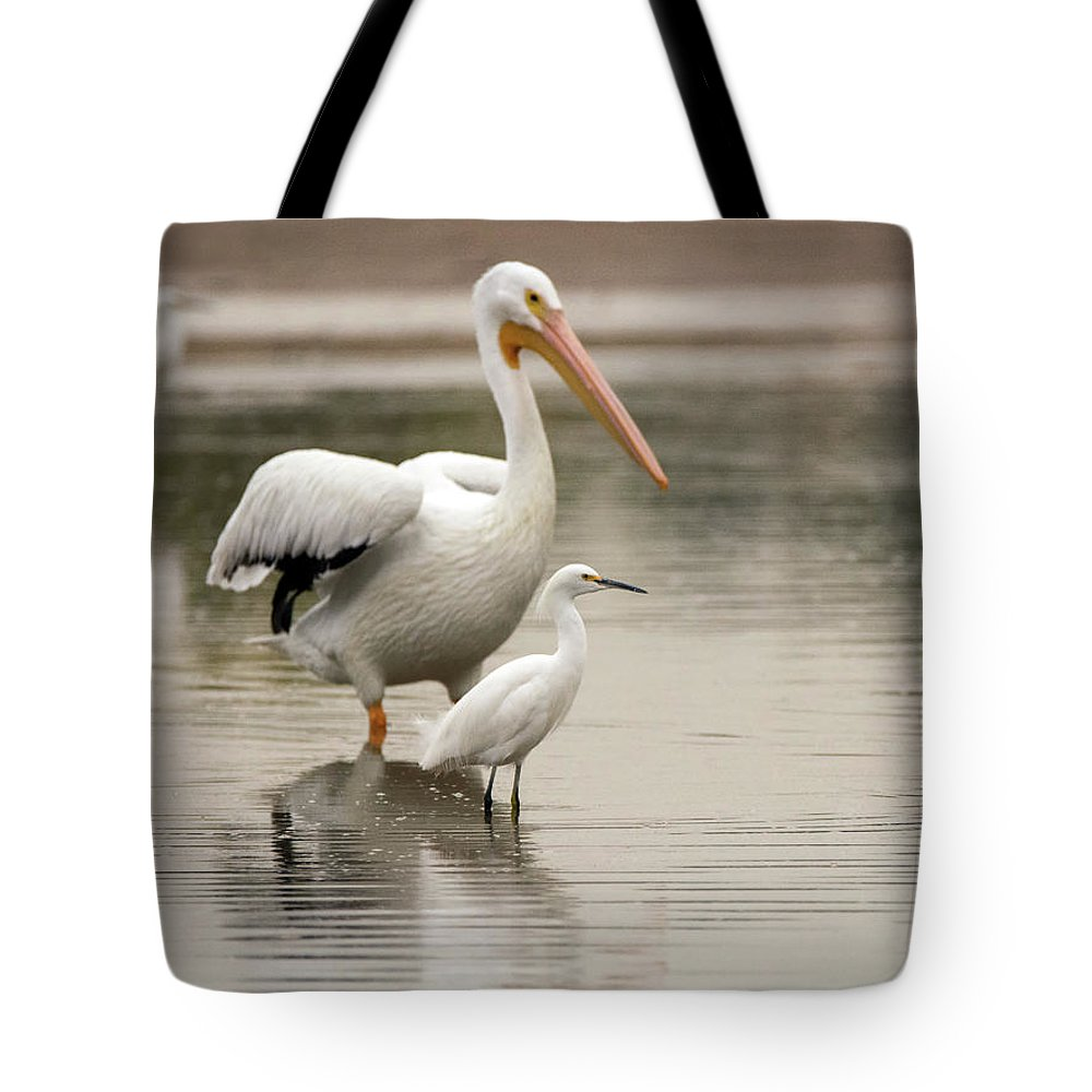 Pelican Tote Bag featuring the photograph Pelican And Snowy Egret 6459-113017-1cr by Tam Ryan