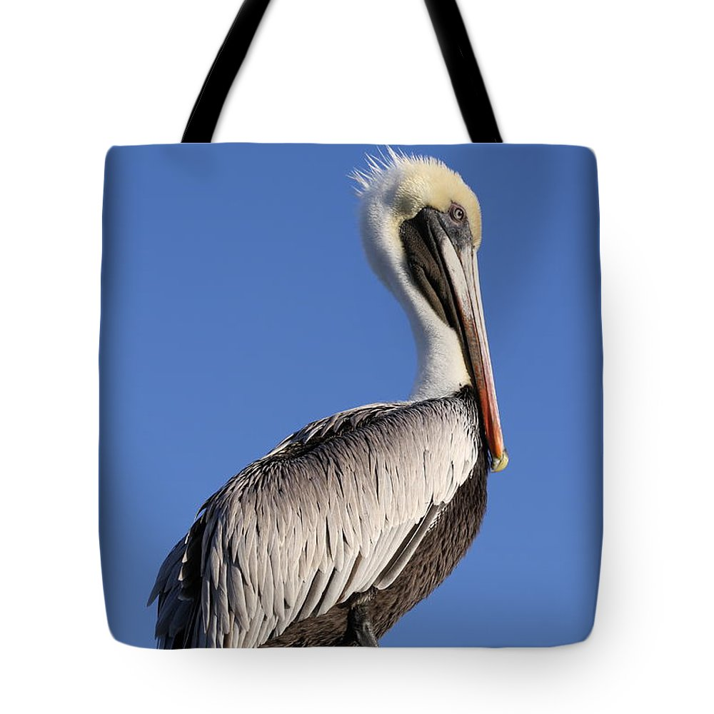 Pelican Tote Bag featuring the photograph Pelican Pose by Jim Clark