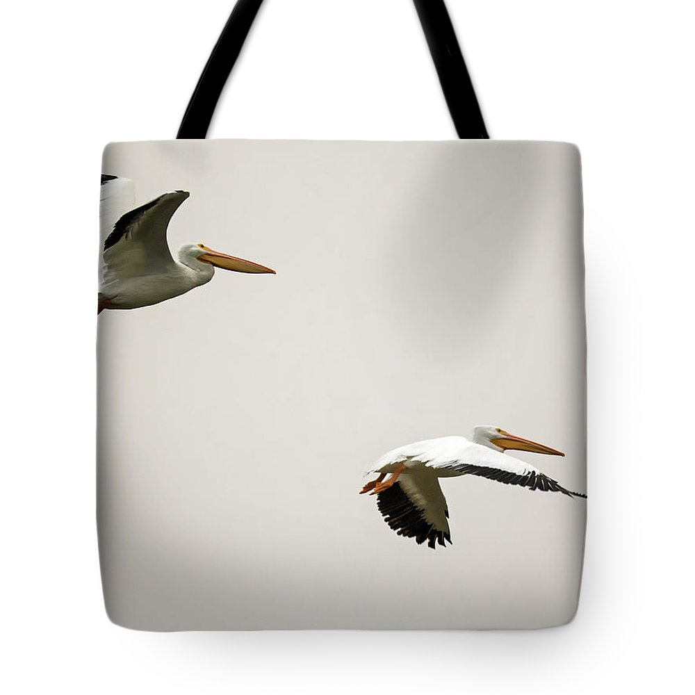 Pelicans Tote Bag featuring the photograph Pelicans 6498-113017-2cr by Tam Ryan