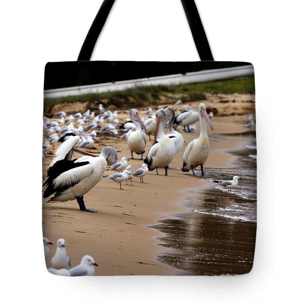 Australia Tote Bag featuring the photograph Pelicans At Pearl Beach 1.0 by Giro Tavitian