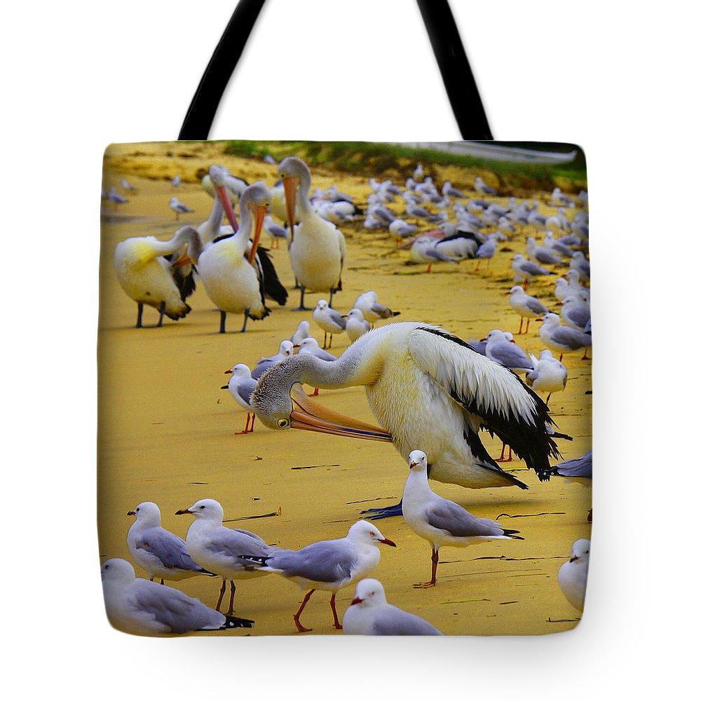 Australia Tote Bag featuring the photograph Pelicans At Pearl Beach 3.1 by Giro Tavitian