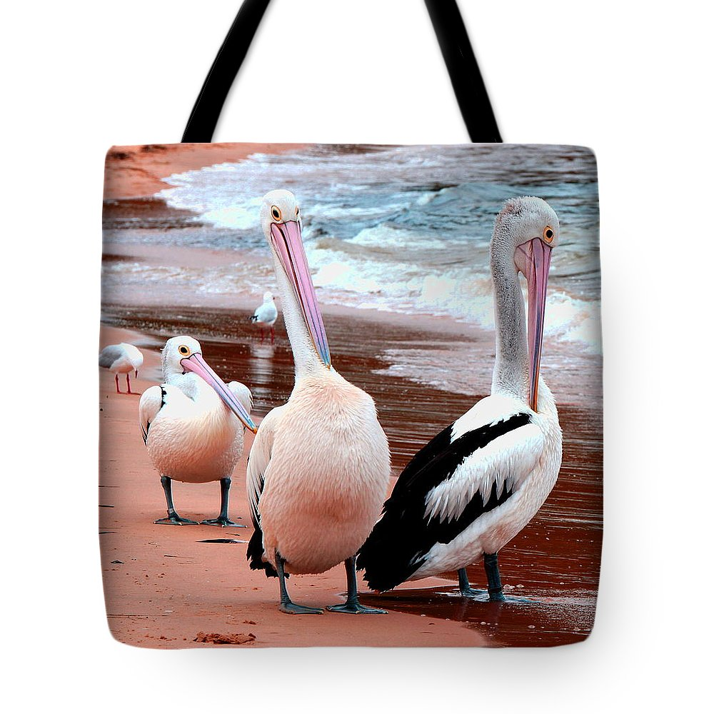 Australia Tote Bag featuring the photograph Pelicans At Pearl Beach 5.2 by Giro Tavitian
