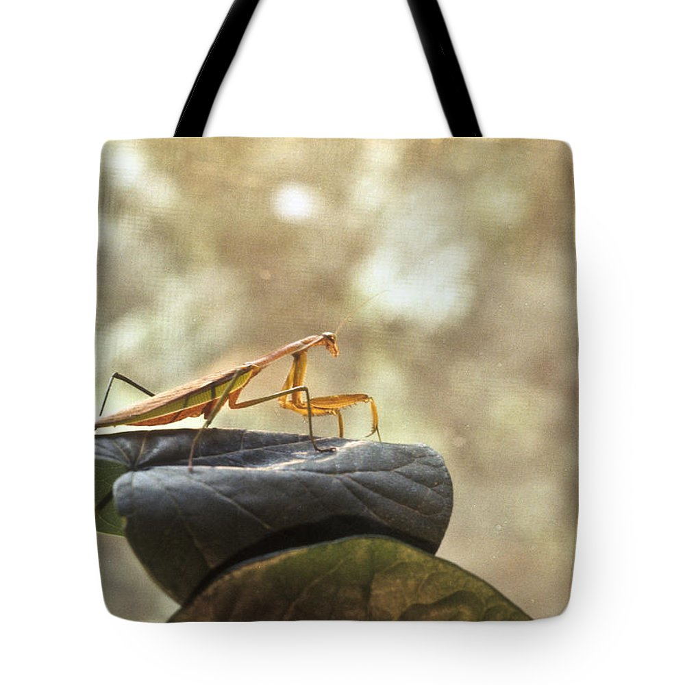 Praying Tote Bag featuring the photograph Pensive Mantis by Douglas Barnett