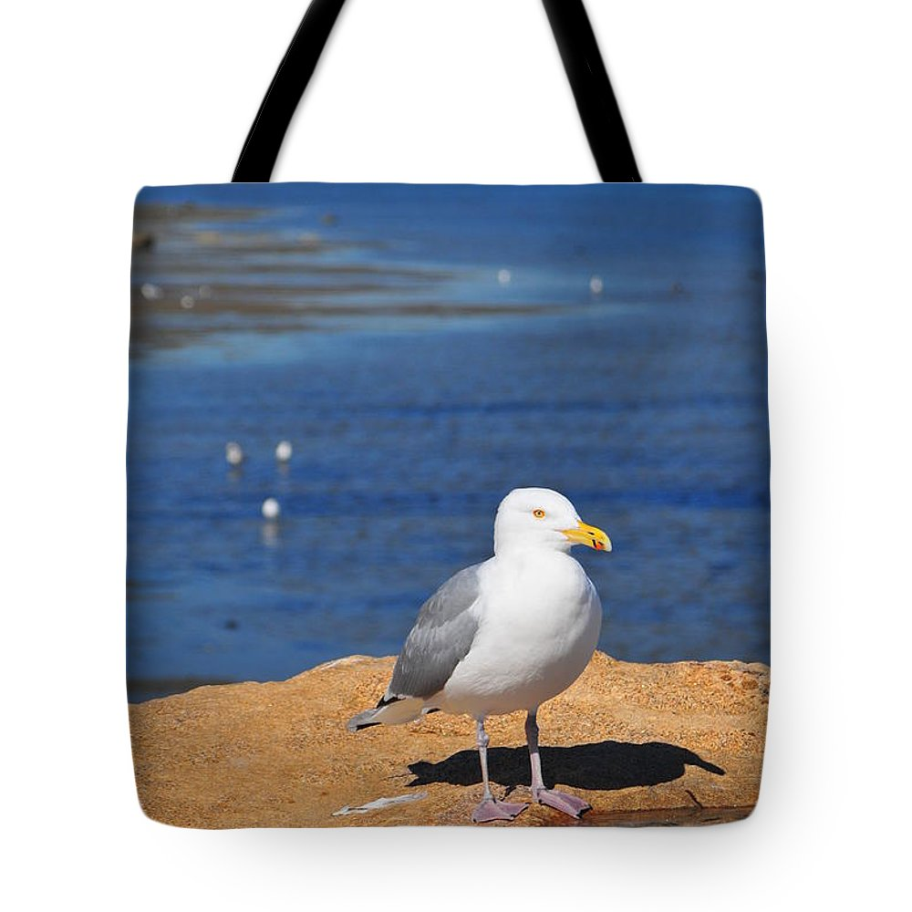 Seagull Tote Bag featuring the photograph Pensive Seagull by Catherine Reusch Daley