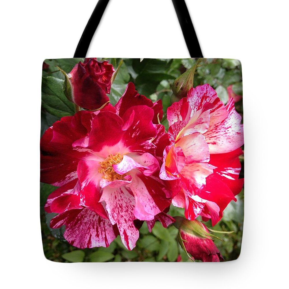 Peppermint Rose Duet Tote Bag featuring the photograph Peppermint Rose Duet by Anna Porter