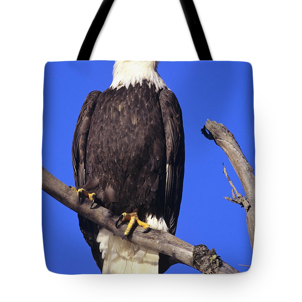 Alaska Tote Bag featuring the photograph Perched Bald Eagle by John Hyde - Printscapes