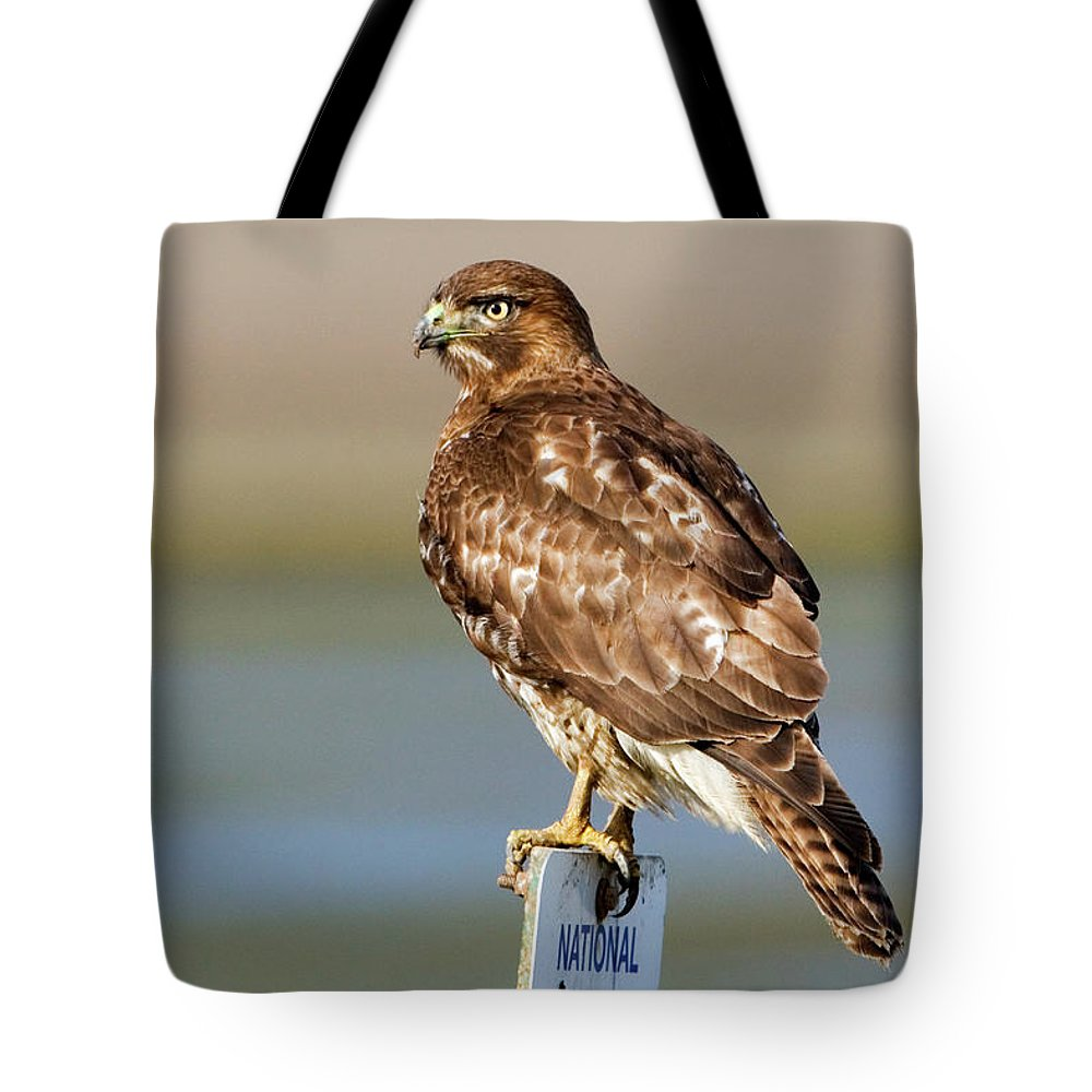 Hawk Tote Bag featuring the photograph Perched Red Tail Hawk by Randall Ingalls