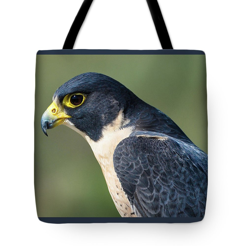 Peregrine Falcon' Tote Bag featuring the photograph Peregrin Falcon by Tim Kathka