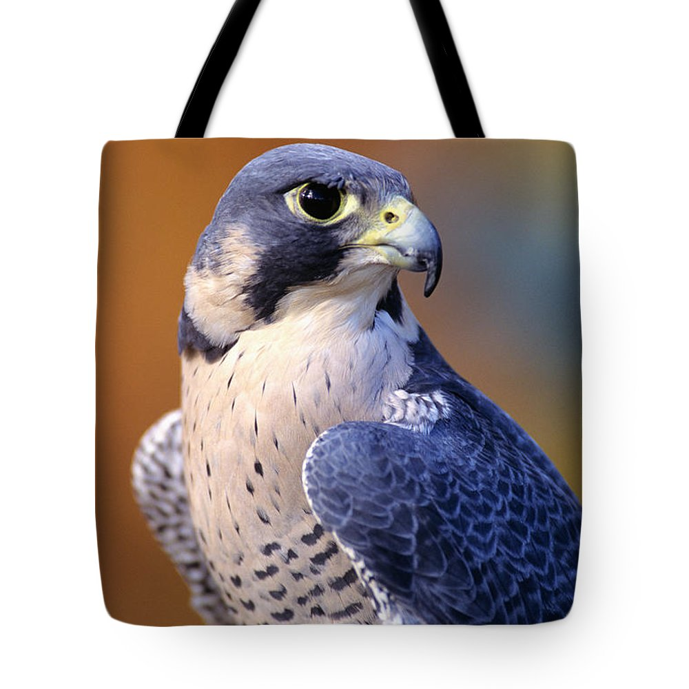 Animal Art Tote Bag featuring the photograph Peregrine Falcon by John Hyde - Printscapes