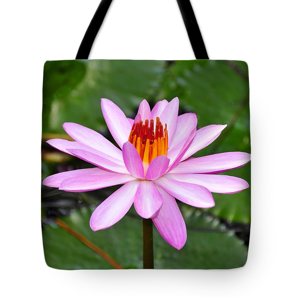 Flower Tote Bag featuring the photograph Perfectly Pink by David Lee Thompson