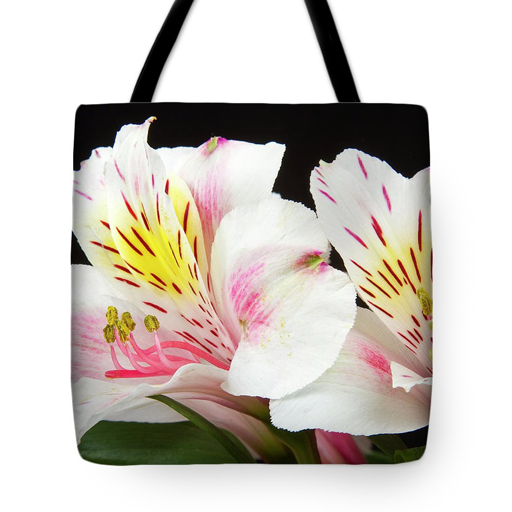 Peruvian Lilies Tote Bag featuring the photograph Peruvian Lilies Colorful Botanical Fine Art Print by James BO Insogna