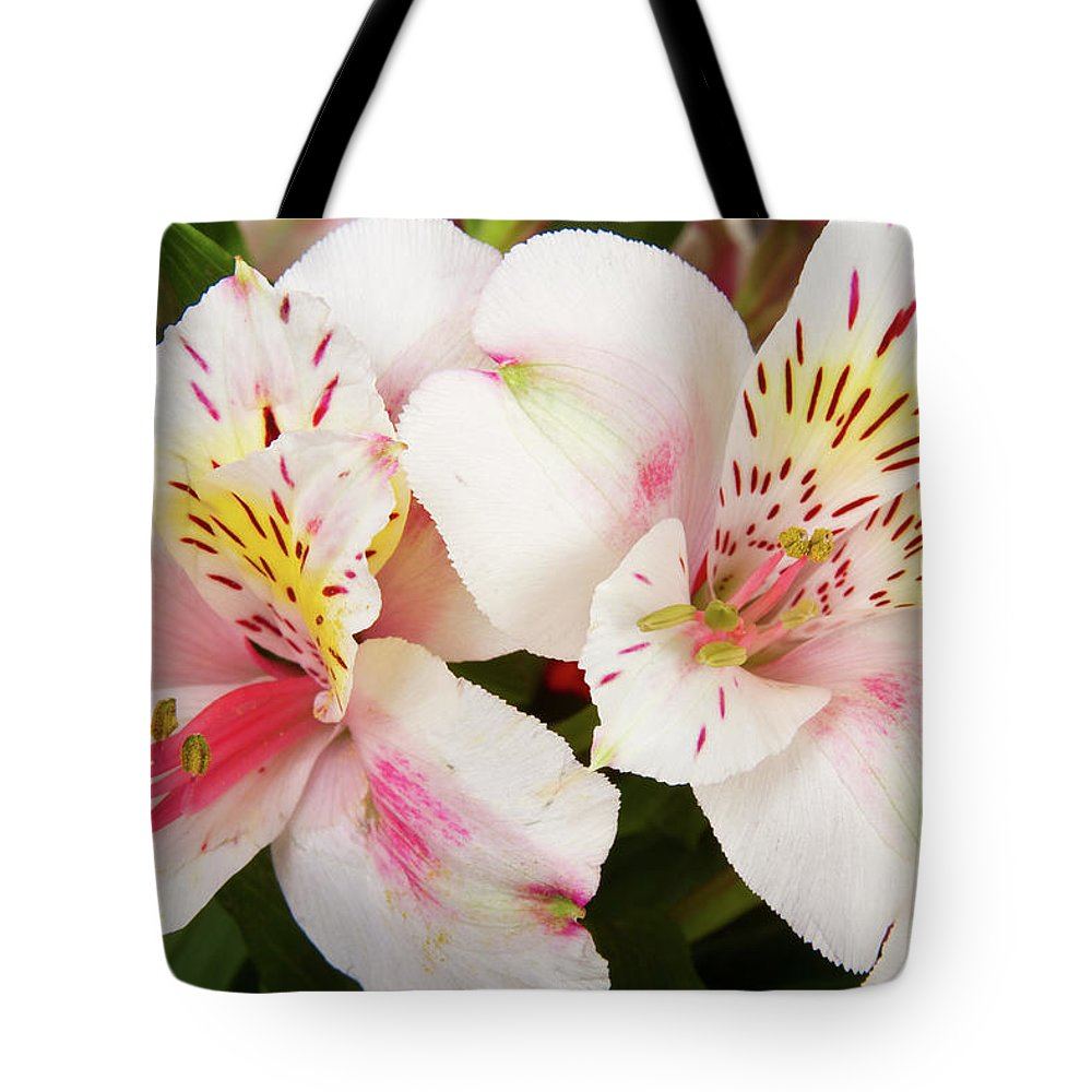 Peruvian Lilies Tote Bag featuring the photograph Peruvian Lilies Flowers White And Pink Color Print by James BO Insogna