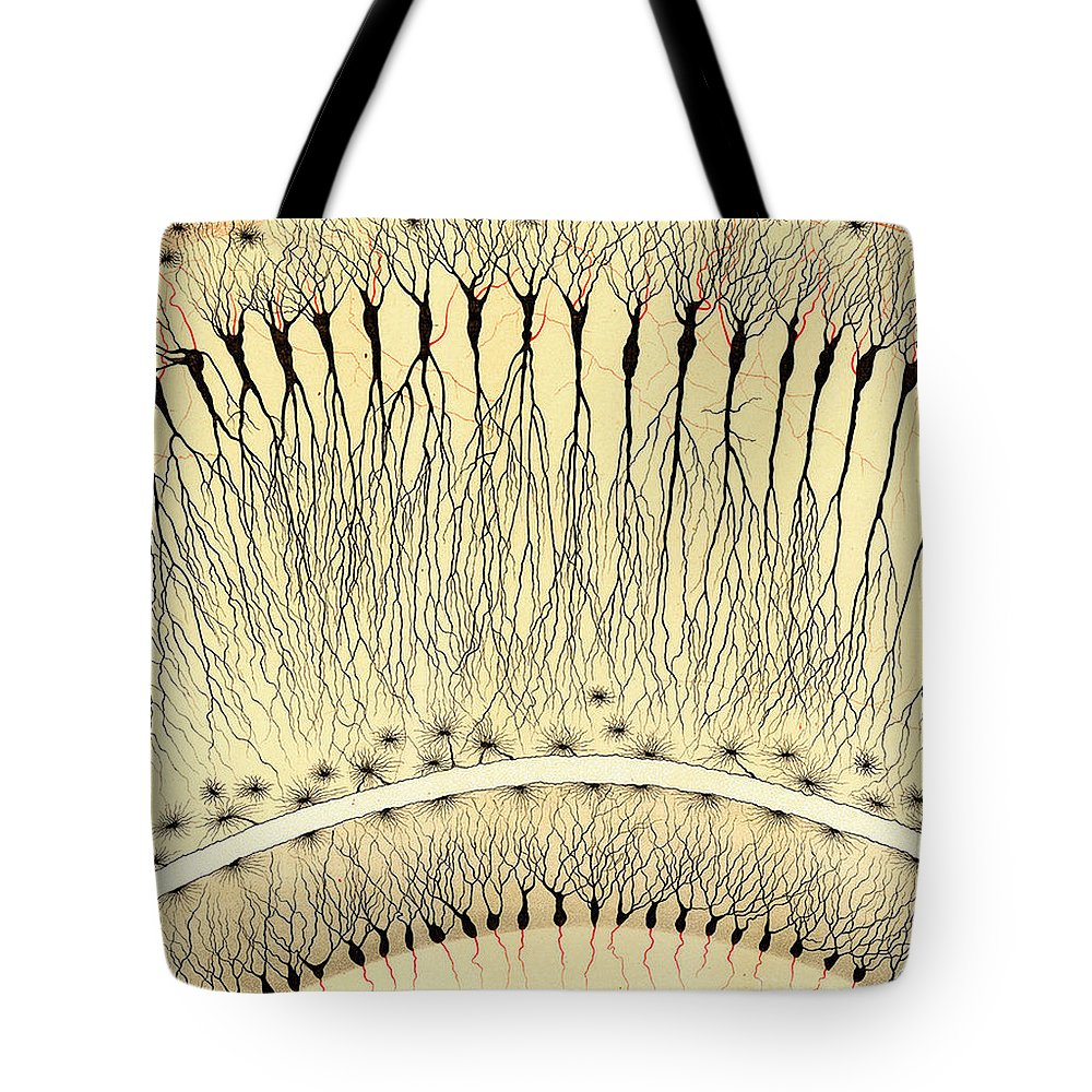 History Tote Bag featuring the photograph Pes Hipocampi Major Santiago Ramon Y Cajal by Science Source