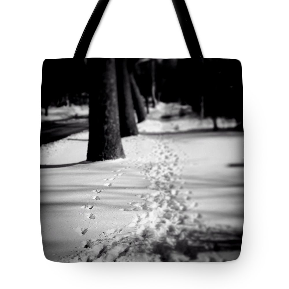 Frankjcasella Tote Bag featuring the photograph Pet Prints In The Snow by Frank J Casella