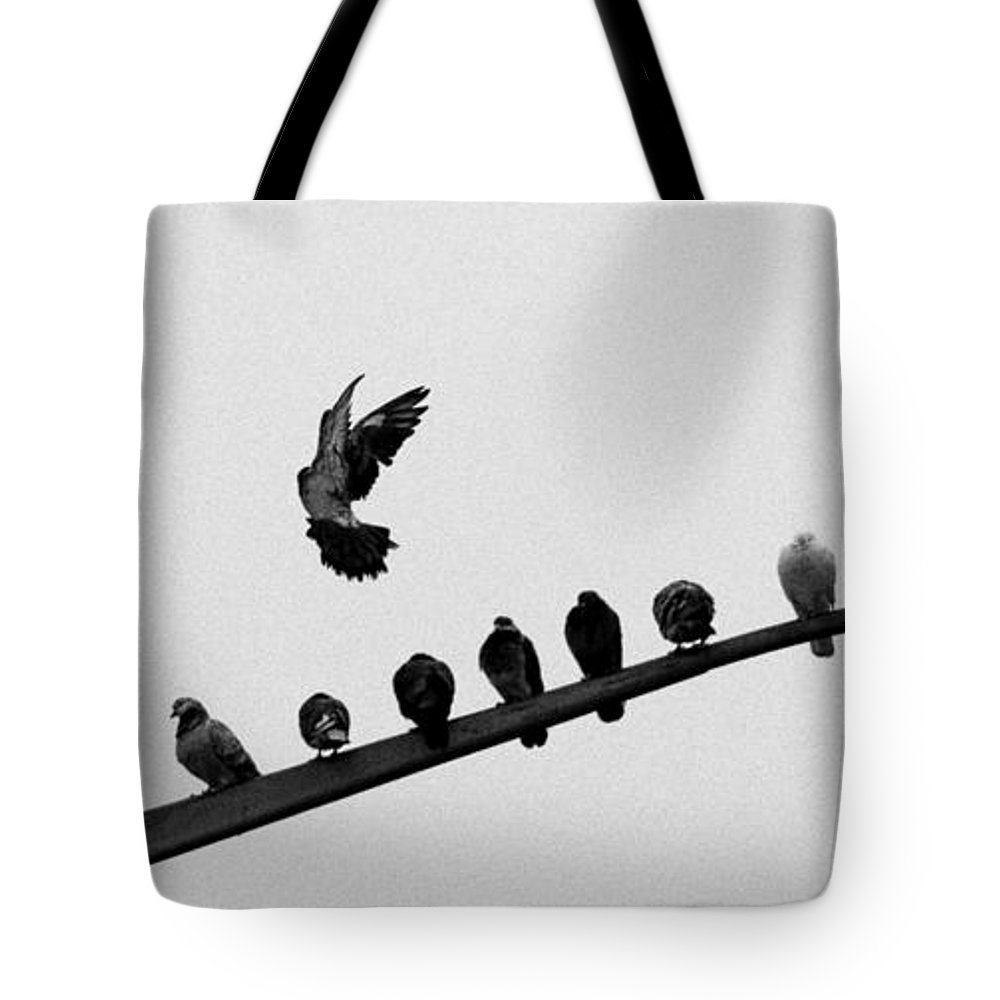 Pigeon Tote Bag featuring the photograph Pigeon Landing, New York by S R Shilling